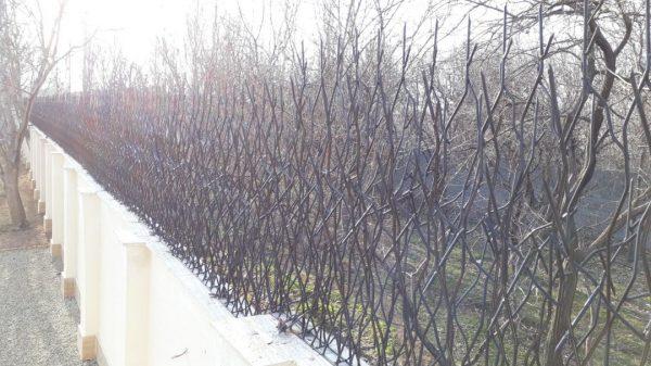 حفاظ شاخ گوزنی 56465